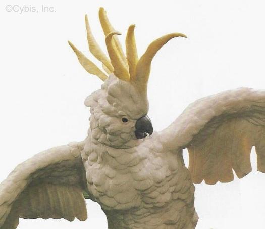 australian-sulfur-crested-cockatoos-detail