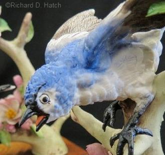 blue-gray-gnatcatcher-male-detail