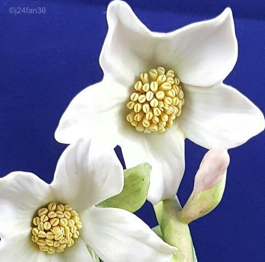 Christmas Rose later version