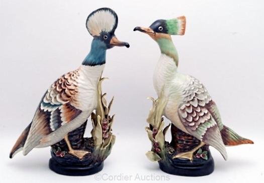 CORDEY hooded merganser ducks