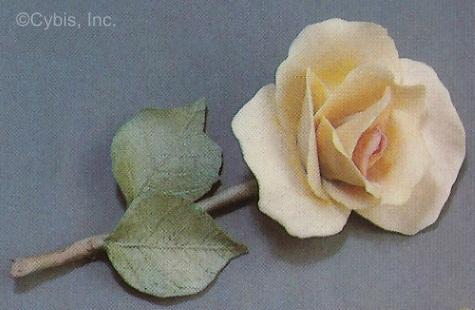 JOY rose by Cybis