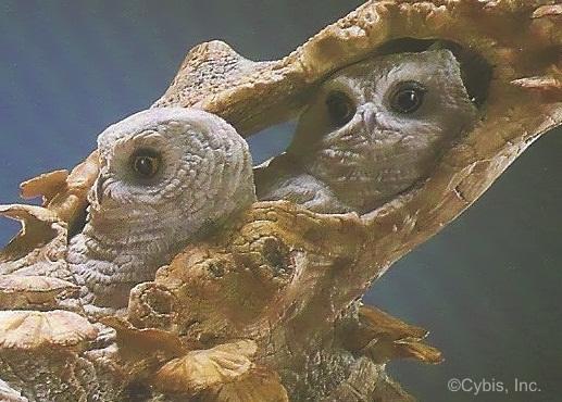 Screech Owl and Siblings detail 2