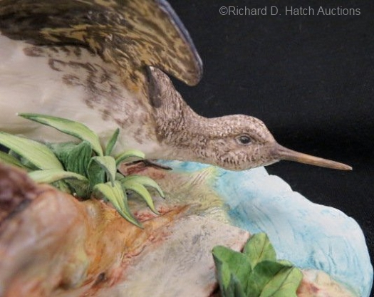 solitary-sandpiper-detail
