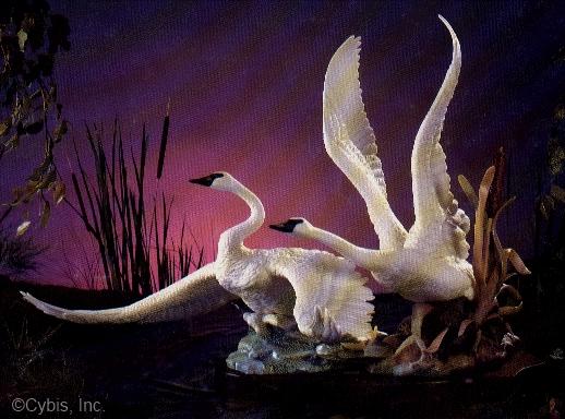 SWANS IN MOTION by Cybis